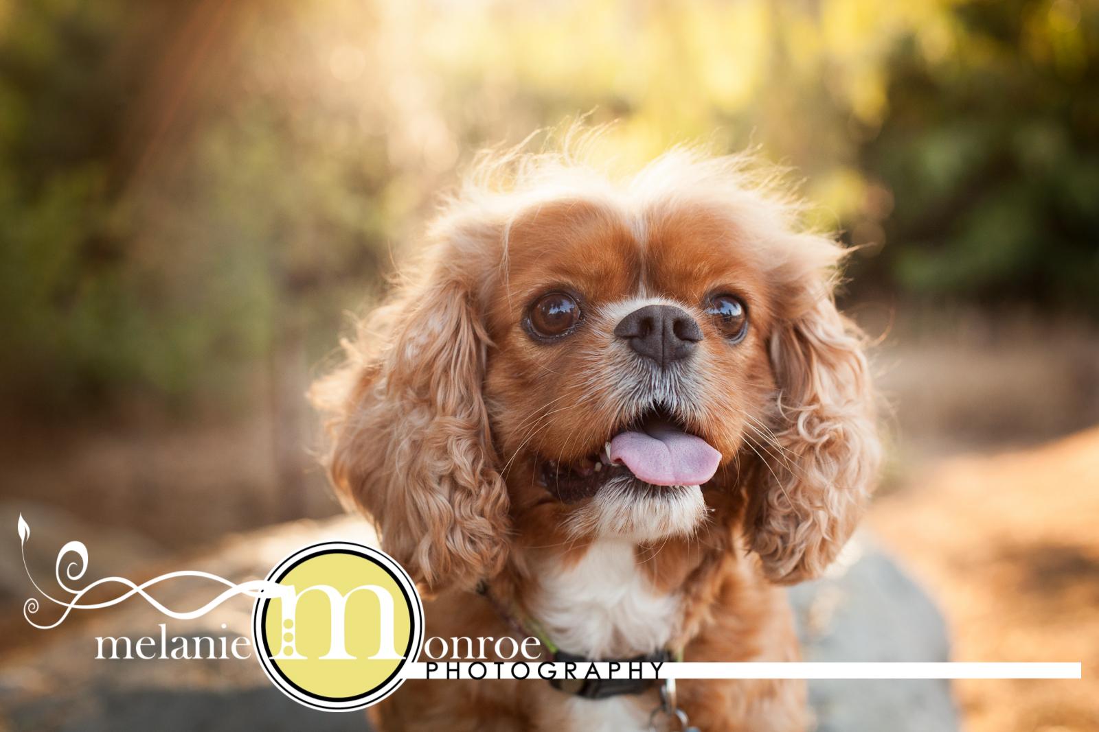 San Diego Dog Photographer
